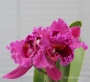I love Orchids!